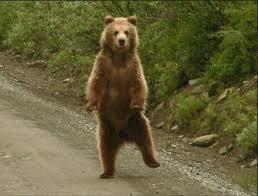 bears453776.jpg