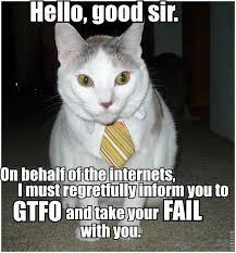 cat gtfo.jpg