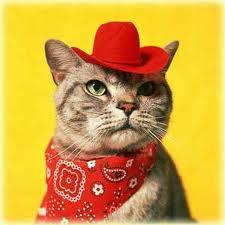 cowboy kitty.jpg
